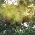 花粉症対策!空気清浄機は置く場所によって効果は変わる?