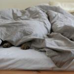掛け布団は夏でも必要?涼しく過ごすための寝具選び